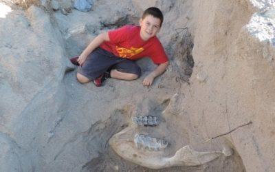 A 9 anni scopre un fossile raro!