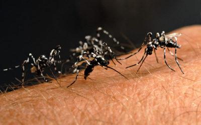Perché sono il piatto preferito delle zanzare?