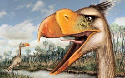 Nuove notizie sull'uccello del terrore