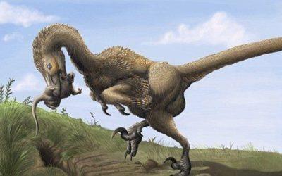Se dormiamo di notte dobbiamo ringraziare i dinosauri per essere… morti!