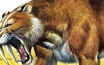 Uomo e Smilodonte: un rapporto antichissimo
