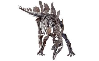 Lo Stegosauro più completo al mondo è a Londra