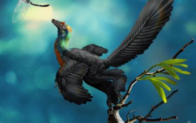 Il dinosauro dalle piume color arcobaleno