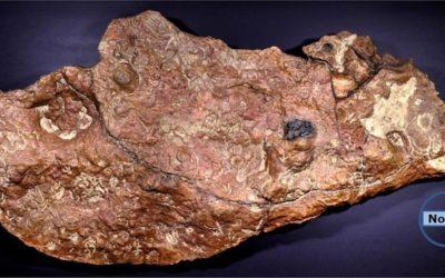 La lastra dei sogni di ogni paleontologo!