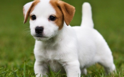 Ti piacciono i cani?