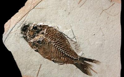 Un pesce un po' datato